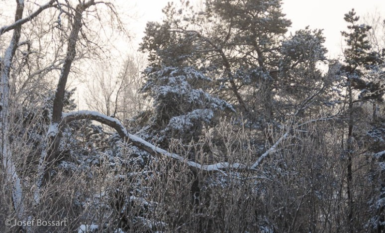 POD-2012-01-27