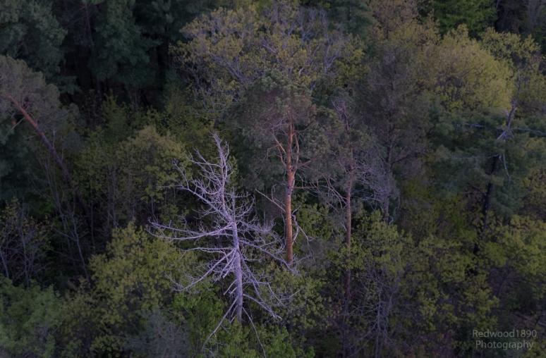 Redwood1890-20150521-_DS72448_DxO